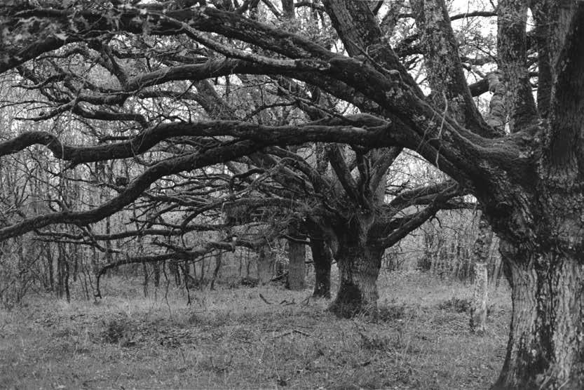 C'est l'arbre, photographies argentiques de Hubert Lebaudy